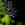 L1000541 uva messori